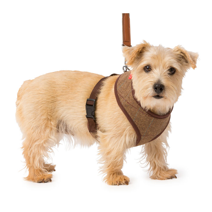 House Of Paws Brown Tweed Memory Foam Harness L Gift
